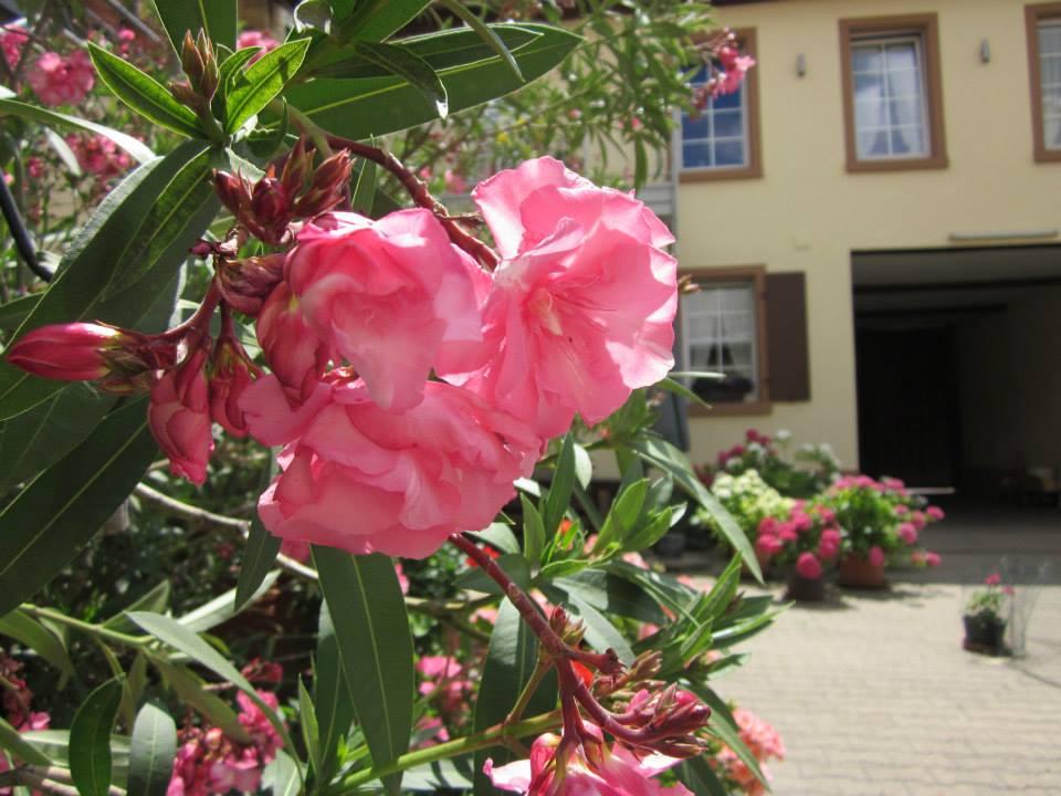 Unser Hof im Blütenmeer