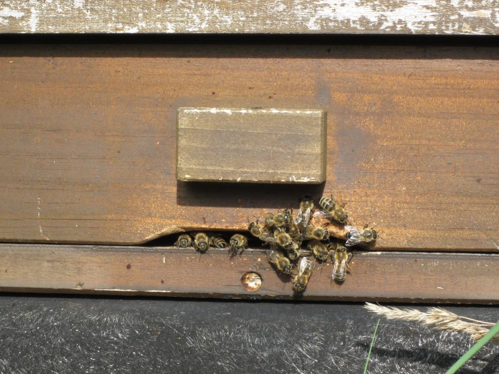 Apfelernte Streuobstwiese Bienen