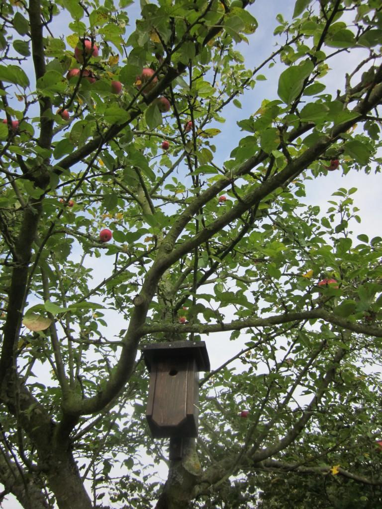 Apfelernte Steuobstwiese Vogelhaus